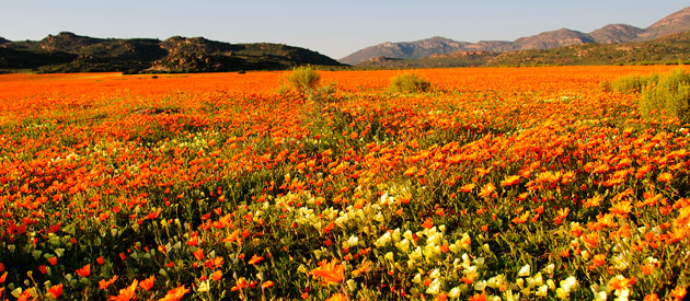Namaqualand - Northern Cape
