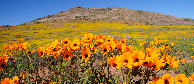 Everything you need to know about Namaqualand