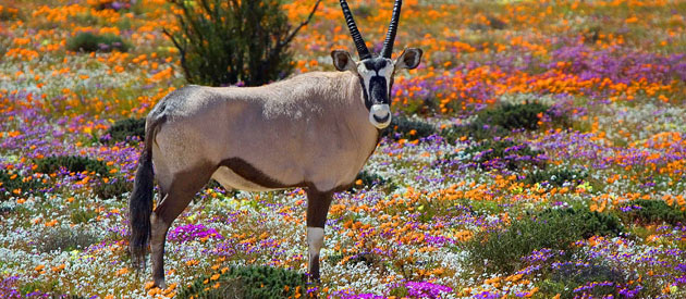 How to Spend a Weekend in Springbok