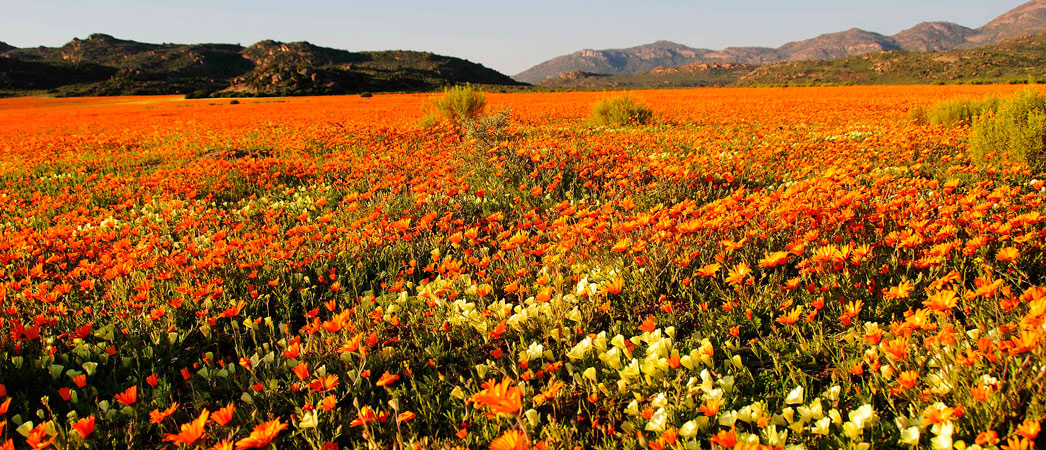 Information on the Namakwa region of the Northern Cape, South Africa, www.namakwa-info.co.za