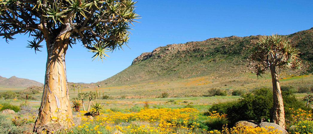 Northern Cape - Namakwa