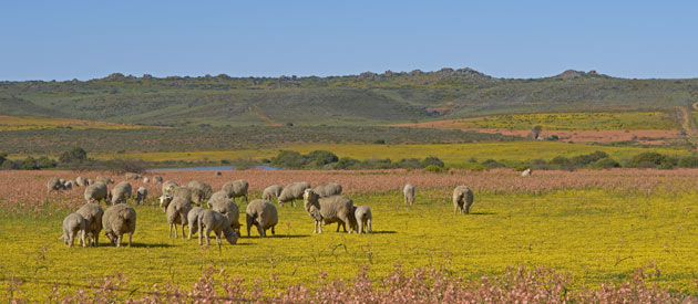 Aggeneys in the Northern Cape, South Africa