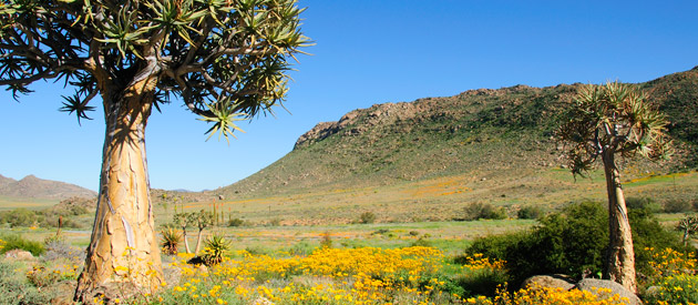 Kleinzee and Koringnaas, in the Northern Cape province in South Africa